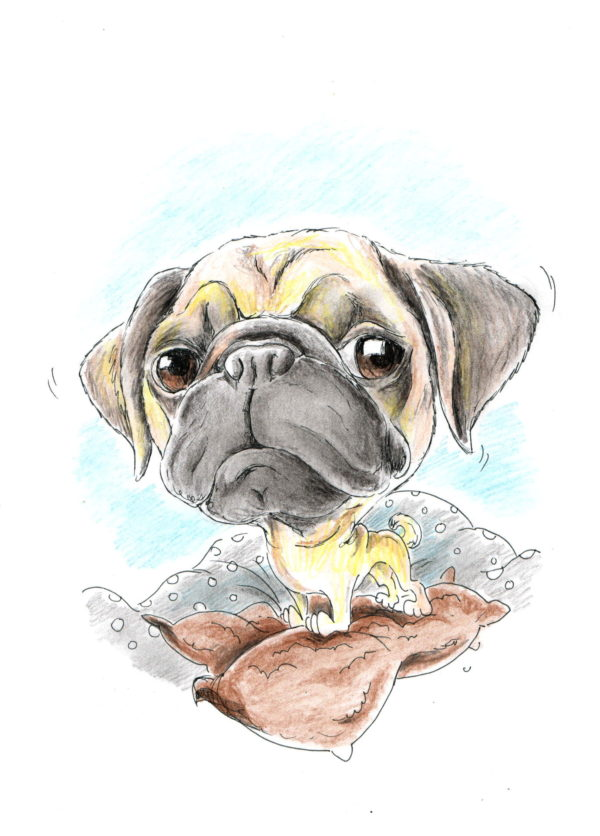 Karikatura A2 - barevná